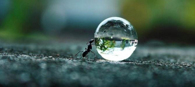 Karınca kârı