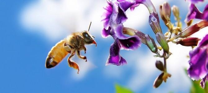 Arılar ve biz